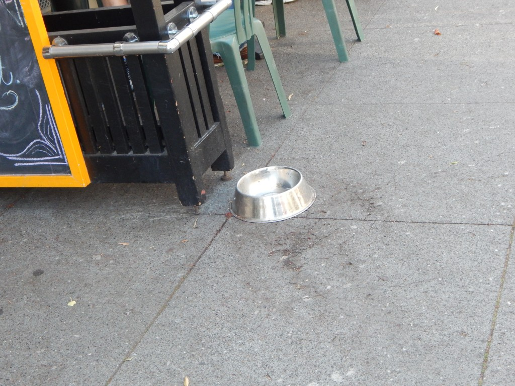 water bowls for dogs in the castro, san francisco